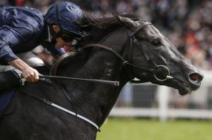 Everest bound: Caravaggio wins The Commonwealth Cup at Royal Ascot this month.