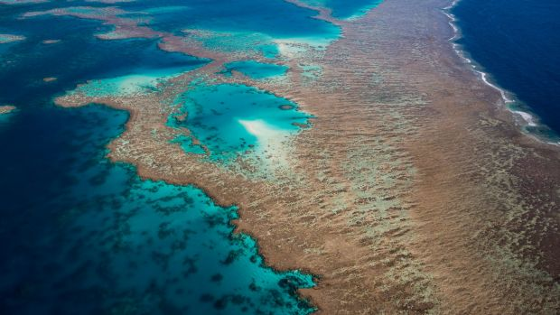 The Great Barrier Reef is the subject of a Deloitte Access Economics report.