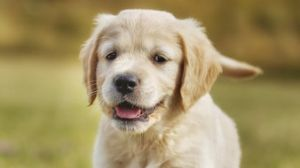 Viewing cute animals could help keep the spark in your marriage