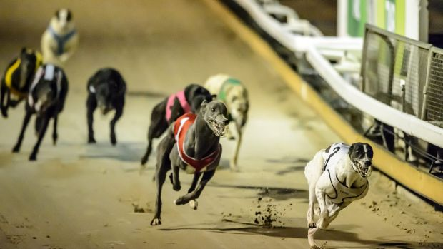 Mr Barilaro said a straight line track would be considered for Queanbeyan to boost animal welfare.