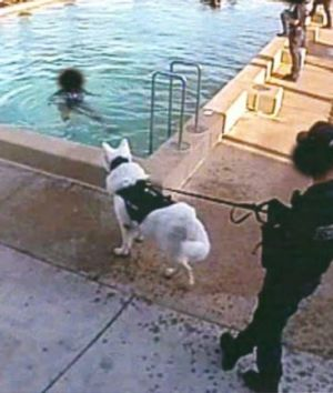 An unmuzzled dog prevents three young inmates exiting a pool.