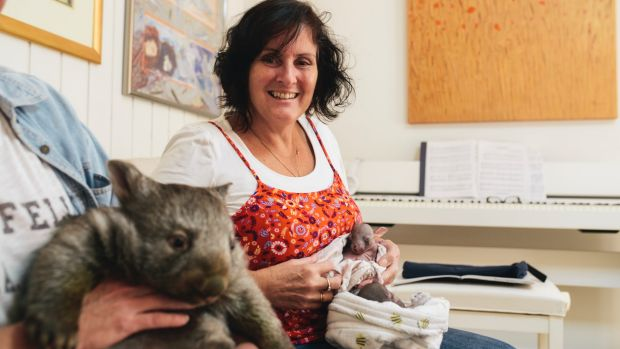 Wombat carer Lindy Butcher at home with three wombats