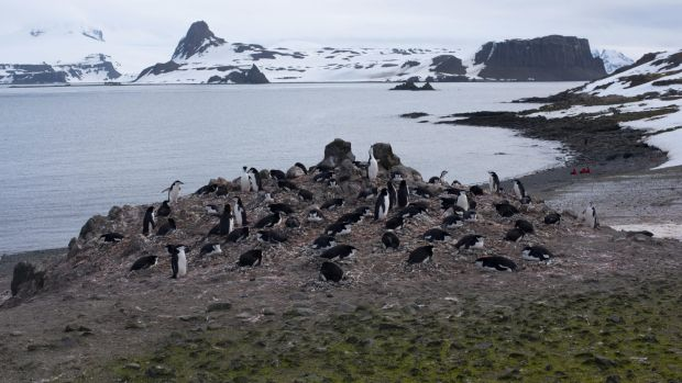 One invasive grass species had already managed to colonise a newly ice-free part of the Antarctic Peninsula, according ...
