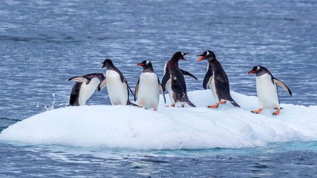 Melting is going on at both ends of the planet, with Antarctic and Arctic sea ice extents reaching record lows in the ...