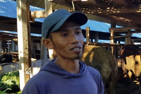 Murdah has changed his mind about raising cattle in Indonesia