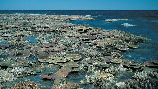 A reef flat exposed at low tide on the Great Barrier Reef, which is under severe threat from climate-change.