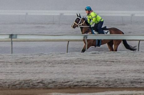 Trainer Paul Facoory's time in Canberra got off to a frosty start, but he saluted on his very first runner in the ...