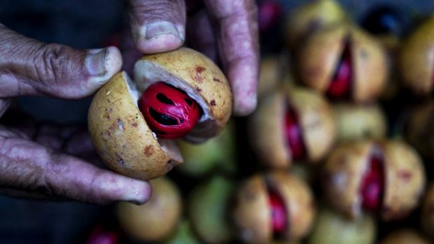 The island was famed for its nutmeg, which is still farmed by locals.