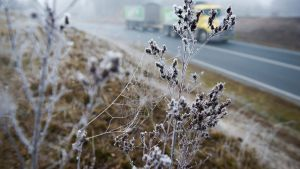Canberrans woke up to a frosted city on Saturday.