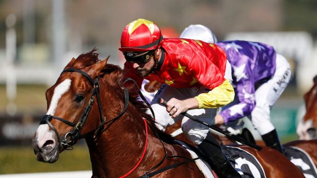 Matured: Tye Angland wins on Assimilate during his first preparation and he resumes in the Eskimo Prince Stakes at ...