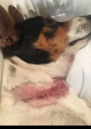 The dogs had multiple lacerations as well as bruising and muscle damage.