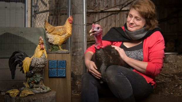 """""""I'd never kept chickens before. In fact, I'd barely kept a house plant before"""": Belinda Heath, with Boris the shy, ..."""