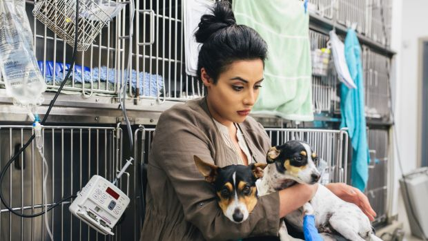 Vanessa Giannasca visiting her dogs Lucky and Lady at Greencross Vets at Calwell after they were mauled by three dogs ...