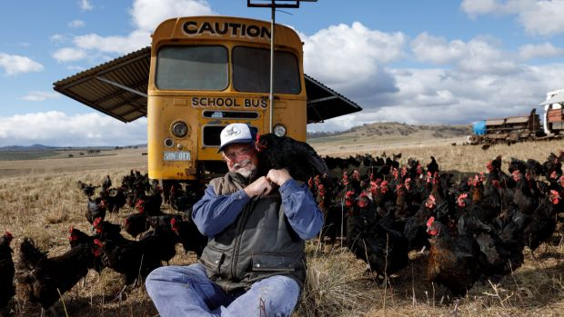 Papanui farm uses buses converted into mobile chicken coops to move the birds around their farm and produce 'open range' ...