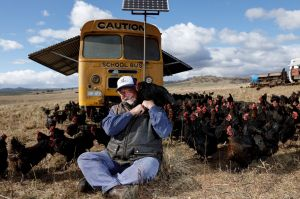 Papanui Open Range Eggs Owner Mark Killen sits with his chickens in front of one of the mobile coups.