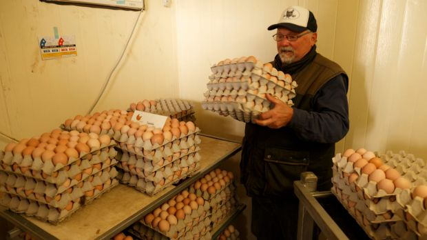 Time to sell: Mark Killen is closely involved with the eggs and thousands of them are freighted to Sydney every week.