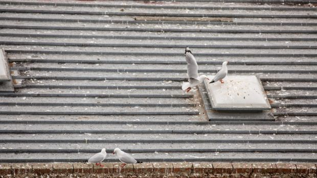 Seagulls on the roof of a Dandenong business.
