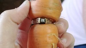 The famous carrot! Image via THE CANADIAN PRESS/HO, Iva Harberg (C/O Twitter/@660NEWS ).