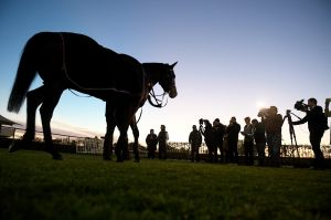 Media star: Winx is led around the mounting yard after trackwork at Rosehill on Thursday.