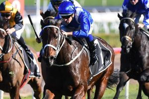 The trainer of Winx will use dome special equipment to try and settle the horse's barrier nerves.