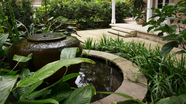 A pond adds to the tropical feel in Michael Bates' North Sydney garden.