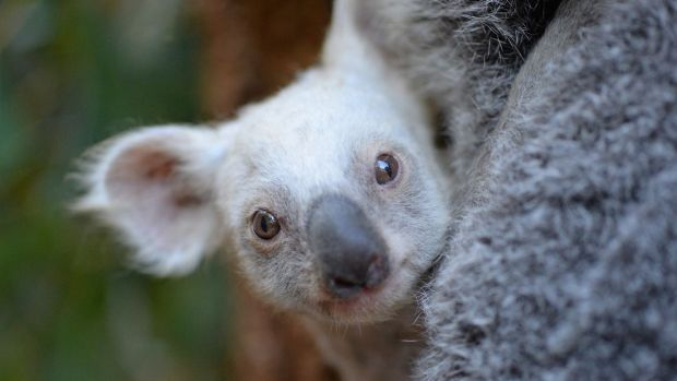 Australia Zoo Welcomes A Very Rare New Arrival
