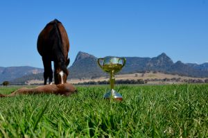 The Emirates Melbourne Cup tour hit Widden Stud in the Hunter Valley as the stud celebrates its 150th year.