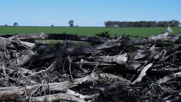 Land clearing near Croppa Creek, near where government compliance officer Glenn Turner was shot dead by farmer Ian ...