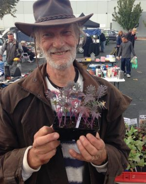 im Kerr of Macquarie with Red Russian kale seedlings on the Kerrs' stall at Jamison Rotary Markets.