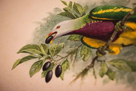 Wildlife filmmaker Sir David Attenborough described Cooper, as being one of the world's best bird artists.