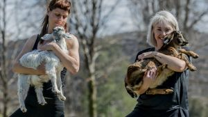 Fiona Harris and Jo Flynn are collaborating to bring Goat Yoga to Canberra. The first event is on November 11.