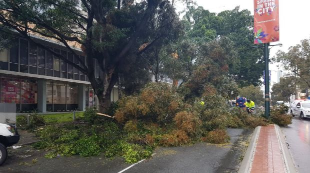 A tree has fallen on Adelaide Terrace during Friday's storm.