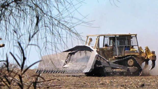 Land clearing has been expanding in Queensland and the pace is expected to quicken in NSW.