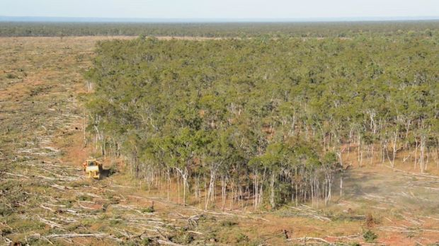 A photo of land clearing in Queensland. The practice, often illegal, is actually increasing.