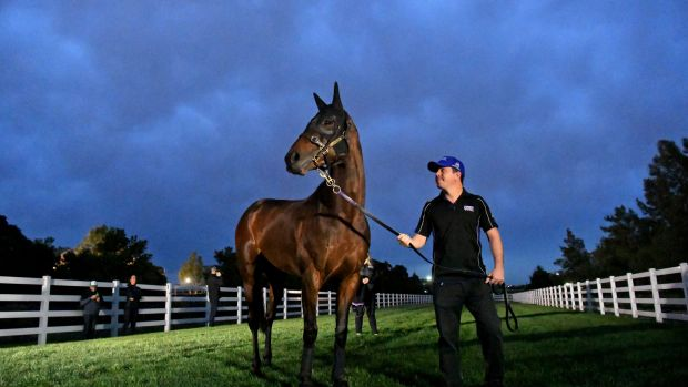 Winx streaks away to win 21st straight race