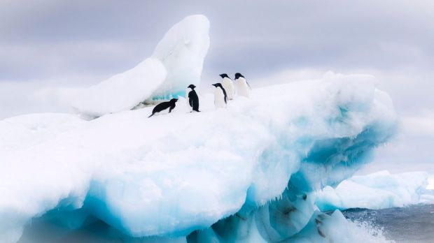 Penguins die in 'catastrophic breeding event' in Antarctica