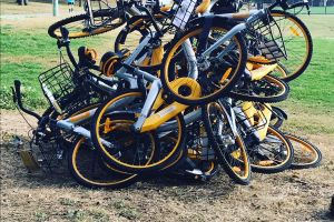 Ride sharing bikes dumped at Waverley Oval, Bondi Road last Friday.