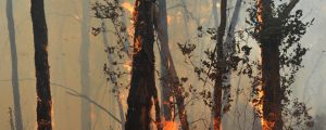 Bushfires pose a threat to the carbon sequestered under the $2.2 billion spent so far under the Emissions Reduction Fund.