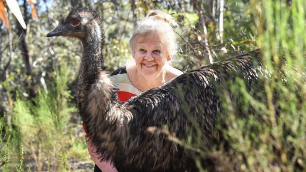 Insatiable curiosity: Professor Graves with an emu at La Trobe University wildlife sanctuary.