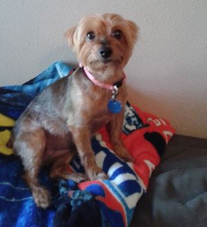 A Texas woman suffered broken-heart syndrome following the death of her Yorkshire terrier, Meha.