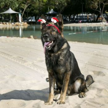 Police are warning Queenslanders to be wary of Christmas dog scammers.