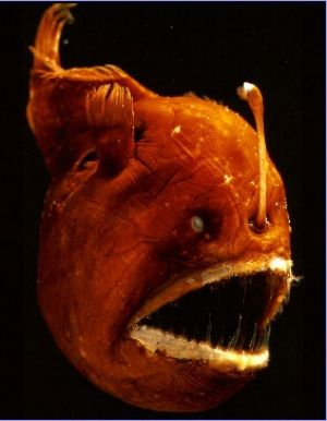 It's not just odd creatures that live in the deep. Turns out there's some odd circulation patterns too.