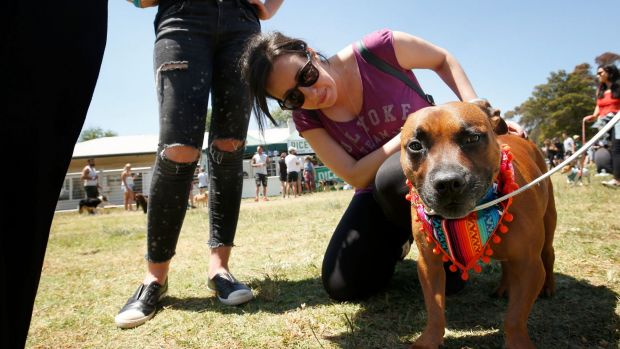 Hey gorgeous: Fan Natalie Calderwood got to meet social media star dog Pikelet at Dogapalooza music festival at Burnley ...