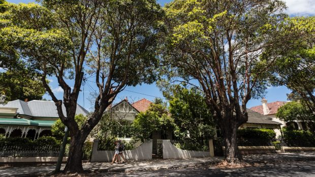 Australia's much-loved street trees could fall victim to rising emissions.