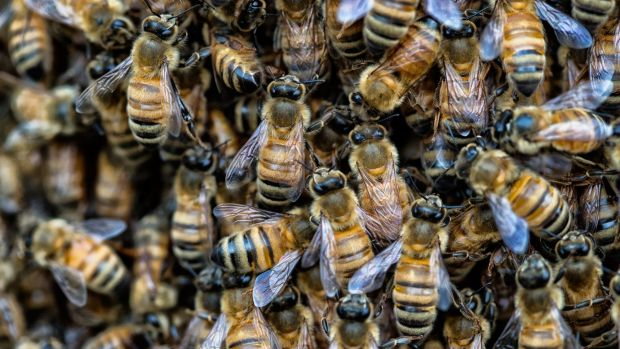Bunnings will pull a pesticide that has allegedly been linked to the deaths of bees.