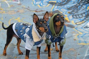 Pethaus sells denim jackets for dogs.?