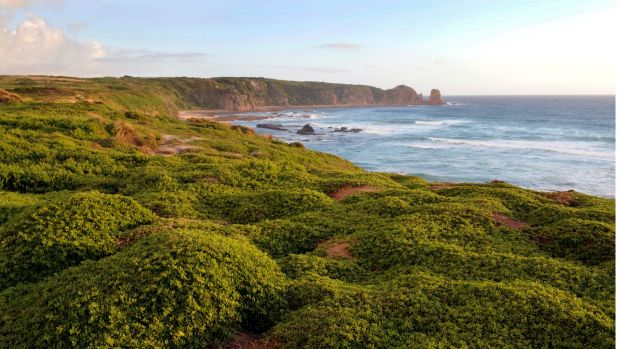 The man drowned at Cape Woolamai, Phillip Island.