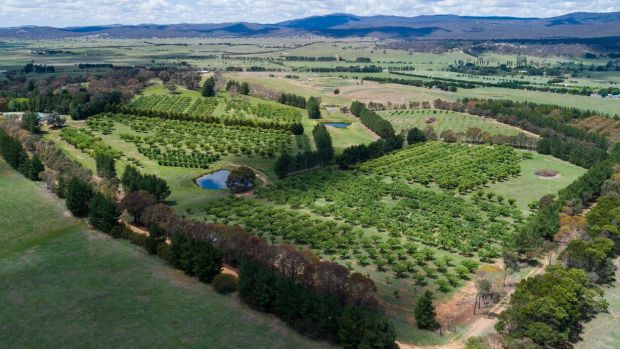 Tweenhills chestnut farm is on a 38 acre block of land in Hoskinstown