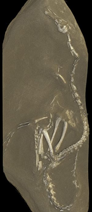 This image provided by the European Synchrotron Radiation Facility shows a view from a 3D rendering of the Halszkaraptor ...