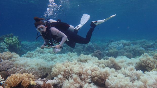 The death of half of the Great Barrier Reef's corals during two summers – according to preliminary estimates – probably ...
